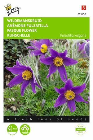 Pasque Flower Pulsatilla seeds