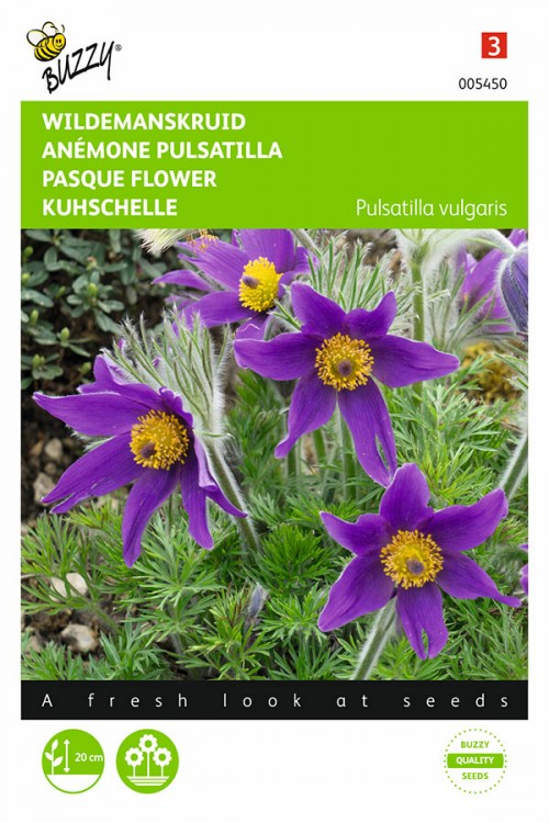 Pasque Flower Pulsatilla seeds