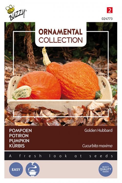 Golden Hubbard pumpkin seeds