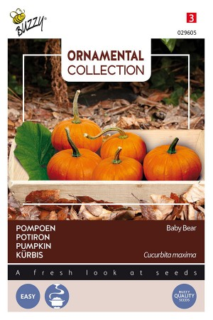 Baby Bear pumpkin seeds