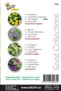 Honey Bee seeds - 4 in 1