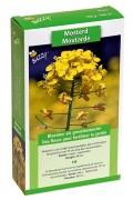 Gele Mosterd zaden 140m2 groenbemester
