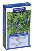 Blue Lupine seeds 10m2 green manure