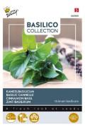 Cinnamon Sweet Basil - Arabian Basil seeds
