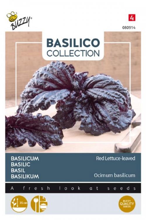A Foglie Violetta di Lattuga Basilicum zaden