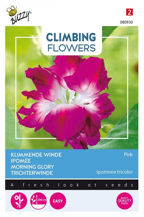 Dubbel Rose - Klimmende Winde