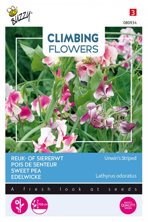 Unwin's Striped Sweet pea Lathyrus seeds