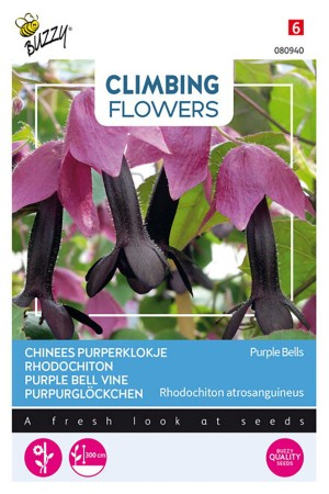 Purple Bell Vine Rhodochiton seeds
