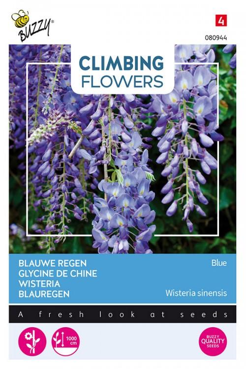 Soft Blue Wisteria - Blauweregen zaden