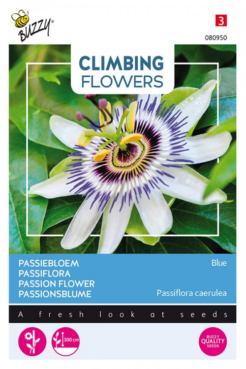 Passion Flower Passiebloem
