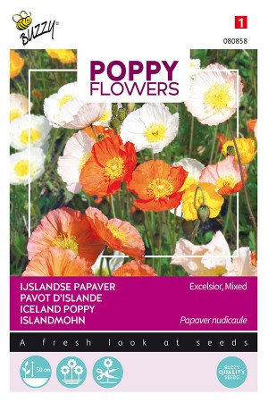 Iceland poppy - Papaver nudicaule seeds