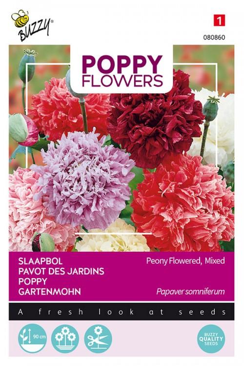 Paeony Flowers - Papaver paeoniflorum