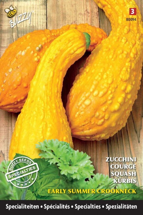 Early Summer Croockneck - Courgette