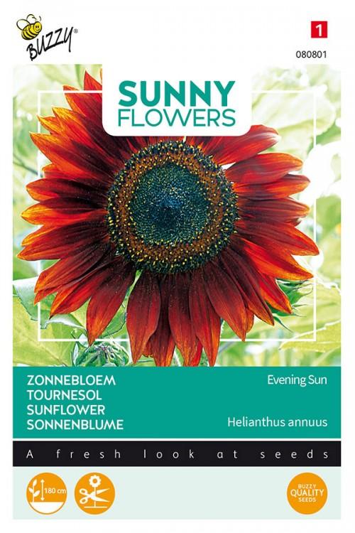 Evening Sun Zonnebloem