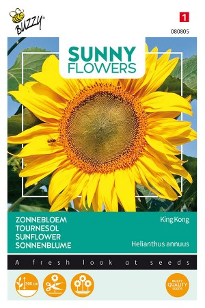 King Kong Sunflower Helianthus seeds