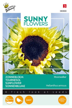 Moonwalker Sunflower Helianthus seeds