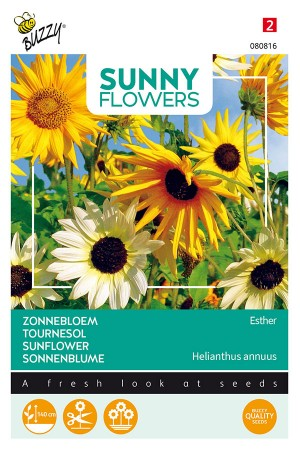 Esther Sunflower Helianthus seeds