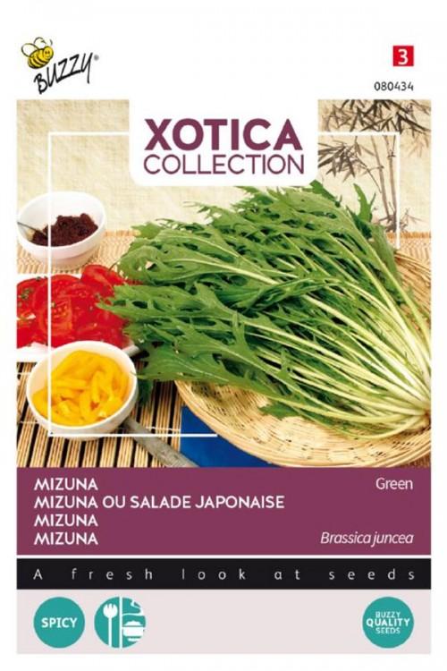 Mizuna - Japanse salade