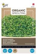 Basilicumkers - Organic Sprouting