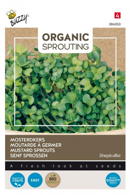 Mustard Sprouts Organic seeds
