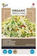 Daikon Radish Sprouts Organic