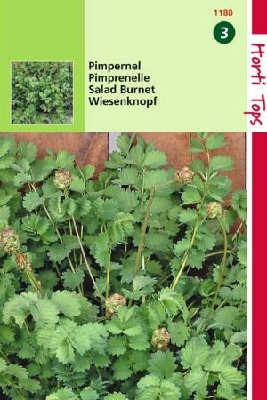 Salad Burnet - Garden Burnet