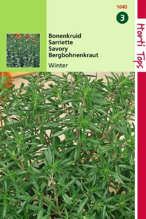 Perennial Savory - Winter...
