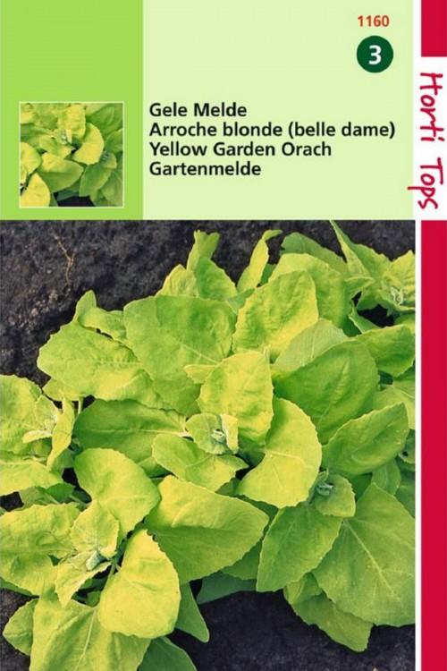 Yellow Garden Melde seeds