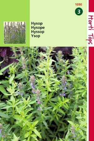 Hyssopus - Hyssop zaden