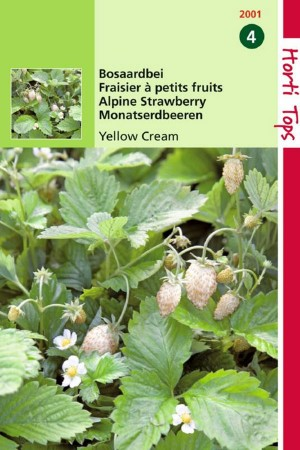 Yellow Cream - Strawberry