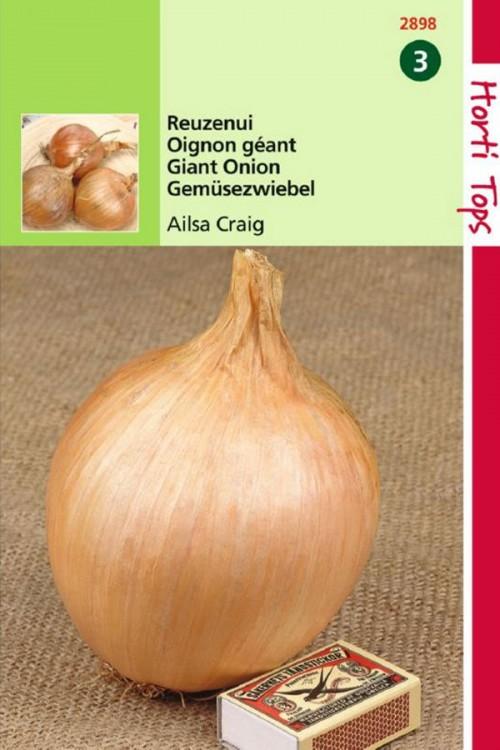 Giant Onion Ailsa Craig