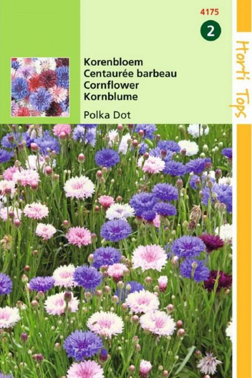 Polka dot Centaurea Korenbloem zaden