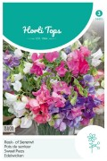 Bijou Sweet peas Lathyrus seeds