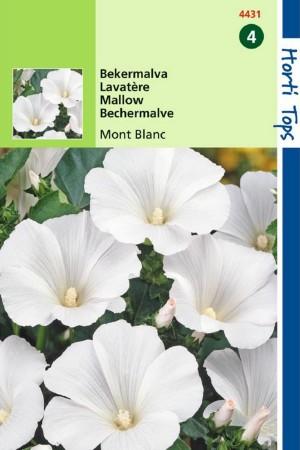 Mont Blanc - Bekermalva zaden