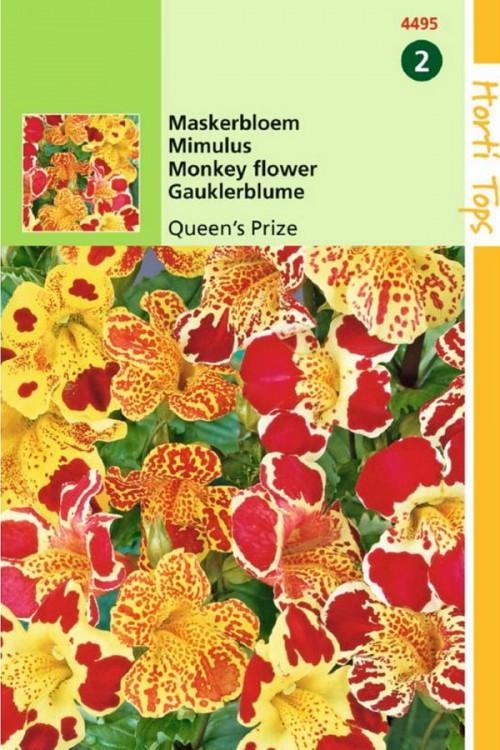 Queens Prize Maskerbloem zaden