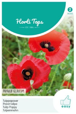 Tulip Poppy - Papaver...