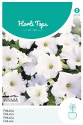 Sneeuwbal Petunia zaden
