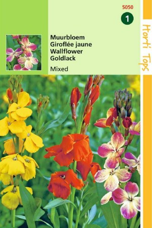 Fair lady - Wall flower seeds