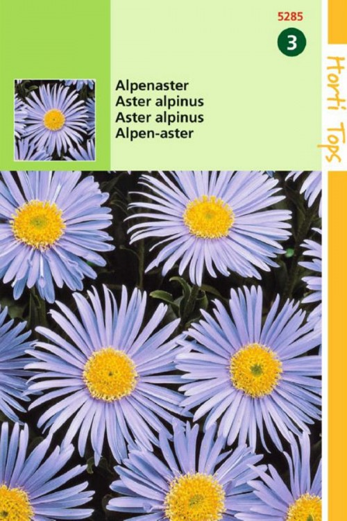 Blue Alpine Aster - Alpinus seeds
