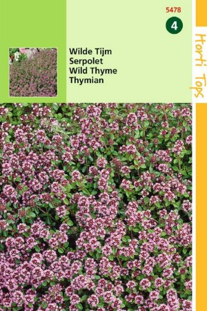 Wild Thyme - Creeping thyme seeds