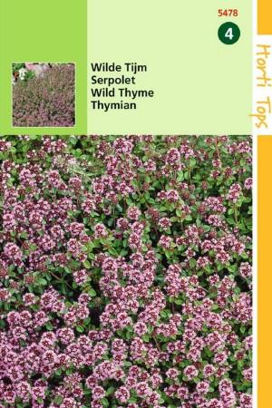Wild Thyme - Creeping thyme...