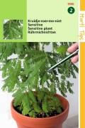 Kruidje-roer-me-niet - Mimosa zaden