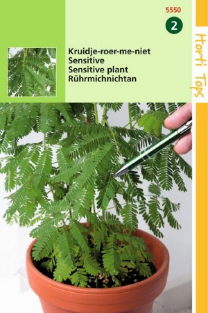 Sensitive Plant - Mimosa seeds
