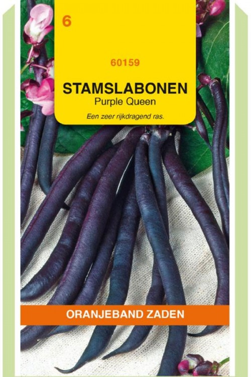 Purple Queen - Stamslabonen