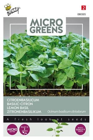 Citroenbasilicum - Microgreens