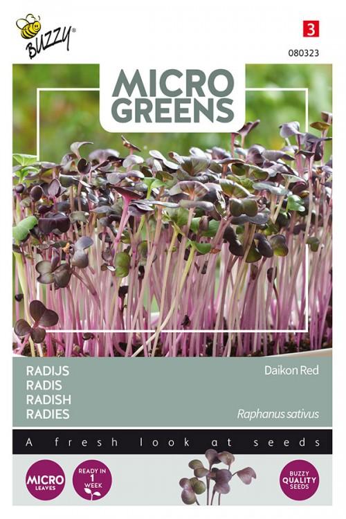 Radish Red Daikon - Microgreens
