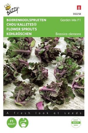Kalettes Garden Mix F1 -...