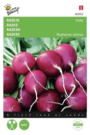 Viola - Radish