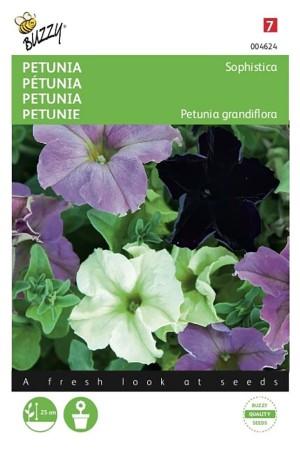Sophistica Mixed - Petunia
