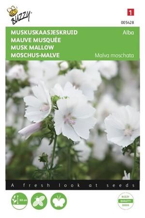 Musk Mallow Alba - Malva...